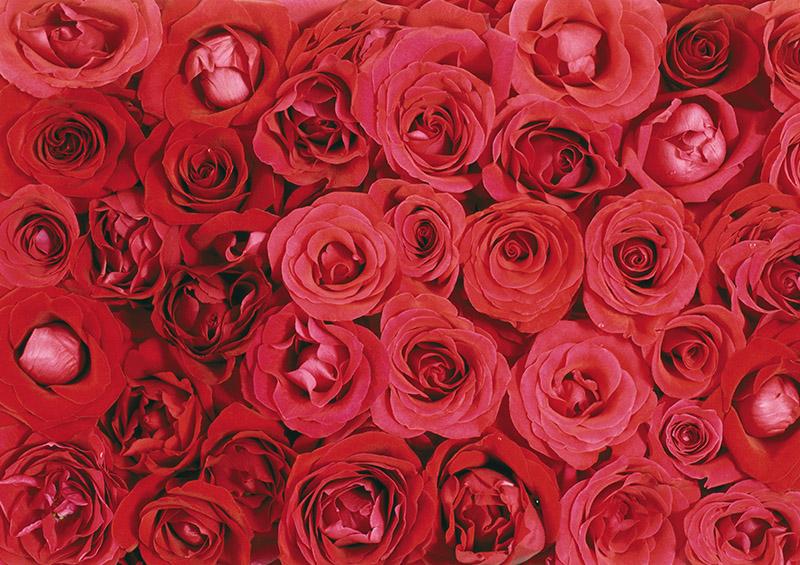 """Disk """"Flower Backgrounds"""""""