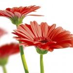 gergi-tavan-gorsel-cicek (4)
