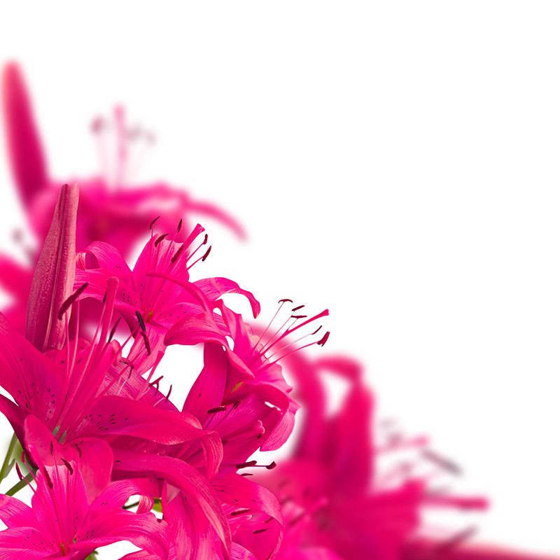 gergi-tavan-gorsel-cicek (7)