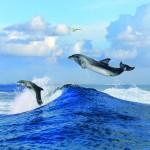 gergi-tavan-gorsel-deniz (2)