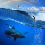 gergi-tavan-gorsel-deniz (20)