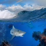 gergi-tavan-gorsel-deniz (23)