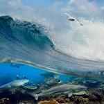 gergi-tavan-gorsel-deniz (4)
