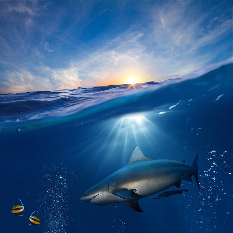 gergi-tavan-gorsel-deniz (43)