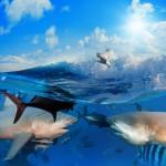 gergi-tavan-gorsel-deniz (5)