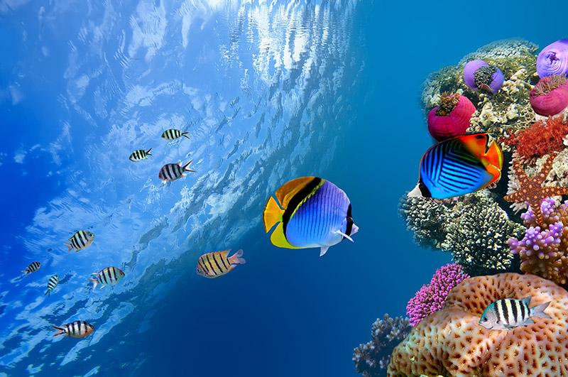 gergi-tavan-gorsel-deniz (58)