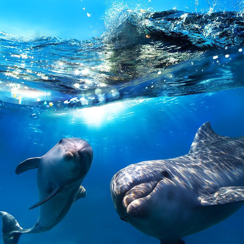 gergi-tavan-gorsel-deniz (59)