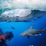gergi-tavan-gorsel-deniz (6)