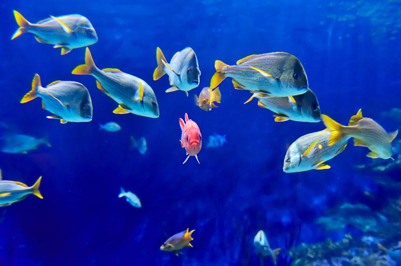 gergi-tavan-gorsel-deniz (60)
