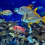 gergi-tavan-gorsel-deniz (61)