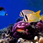 gergi-tavan-gorsel-deniz (62)