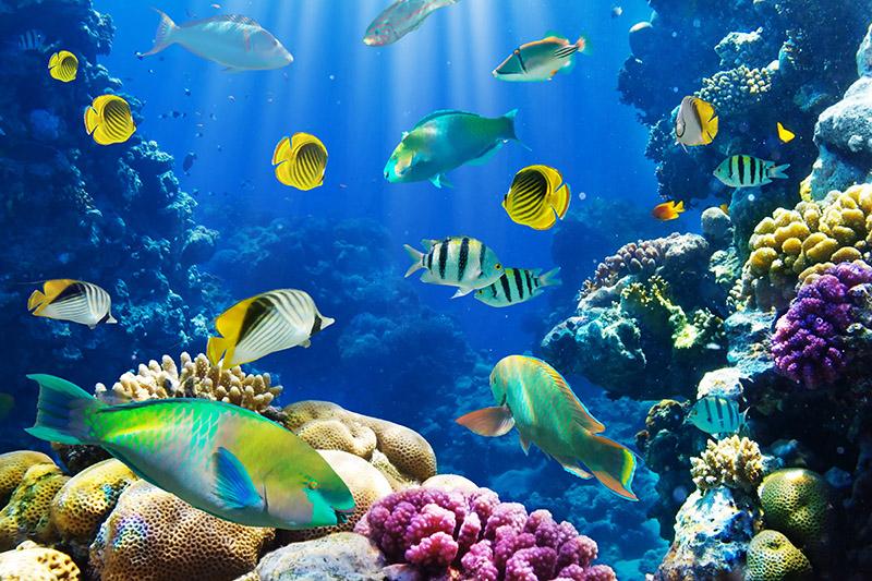 gergi-tavan-gorsel-deniz (63)