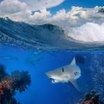 gergi-tavan-gorsel-deniz (8)